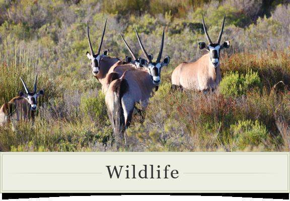 Karoo-Wildlife